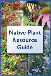 Native Plant Resource Guide